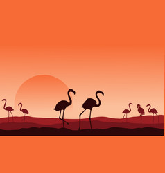 collection of flamingo scenery silhouette design vector image vector image
