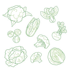 cabbage vegetarian farm products set hand-drawn vector image