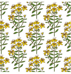 Hypericum pattern in hand drawn style vector
