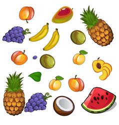 Set of appetites tropical fruites vector