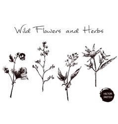 Herb and Wild Flowers vector image