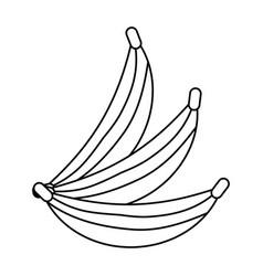 Delicious bananas fruit vector