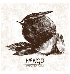 Digital detailed mango hand drawn vector