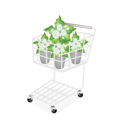 Jasmine Flowers in A Shopping Cart vector
