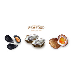 Mussels oysters and scallop seafood vector