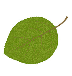 wood leaf vector image