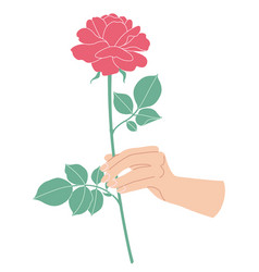 female hand holding branch of blooming rose vector image