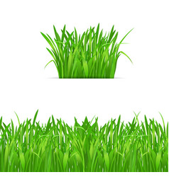 green grass tuft and border on white background vector image
