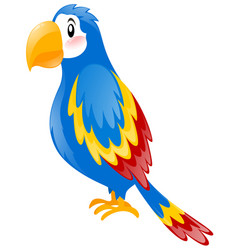 parrot with blue wings vector image
