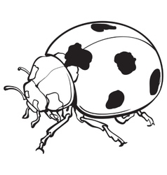 Red ladybug ladybird with black spots isolated vector