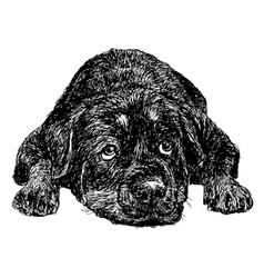 Rottweiler 27 vector