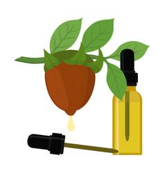 jojoba branch organic oil bottle liquid vector image vector image