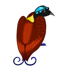 Bird of paradise icon vector