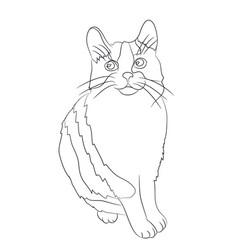 cat lines vector image