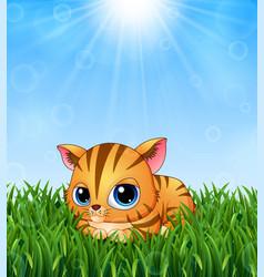 Cute kitten cartoon lay down in grass on a bac vector