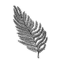 Fern leaf sketch vector