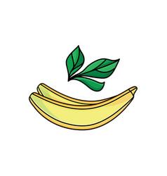 Flat sketch style yellow fresh ripe banana vector
