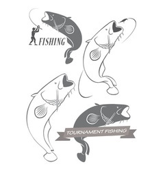 catfish vector image vector image