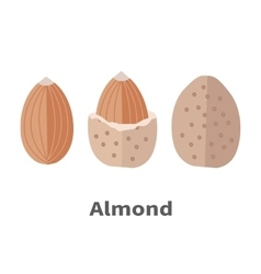 Almond nuts in flat design vector