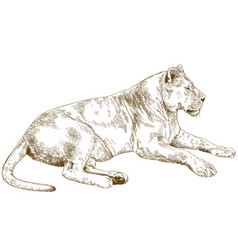 Engraving lioness vector