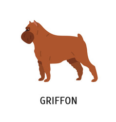 griffon bruxellois or brussels griffon cute small vector image