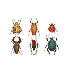 Hard-winged bugs and insects isolated on white vector