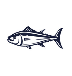 Salmon fish on white vector