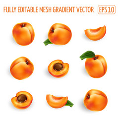 Set ripe apricots on a white background vector