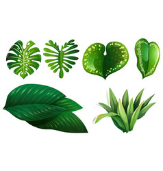 different types of green leaves vector image