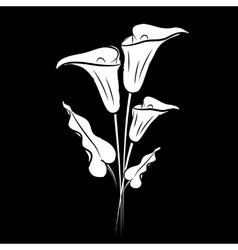 Calla lily black vector image