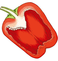 red bell pepper in cross section vector image
