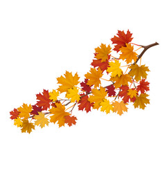 maple branch with yellow leaves vector image vector image