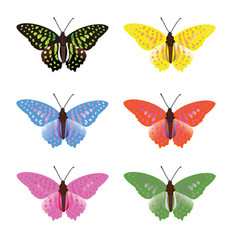 color full butterfly vector image