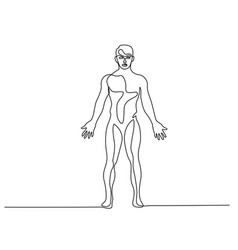 man standing in anatomy position continuous line vector image