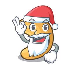 Santa roasted cashew nuts isolated on mascot vector