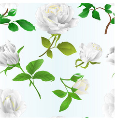 seamless texture white roses with buds and leaves vector image