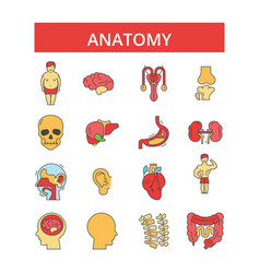 anatomy thin line icons linear flat vector image
