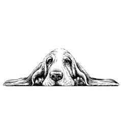 dog breed basset hound sticker on wall vector image