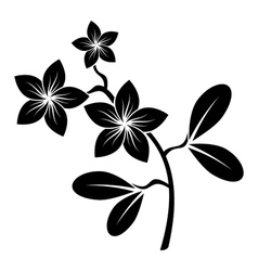 frangipani branch silhouette vector image