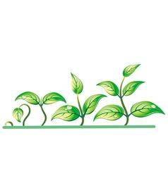 Progression seedling growth vector