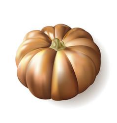 ripe autumn pumpkin on white background vector image
