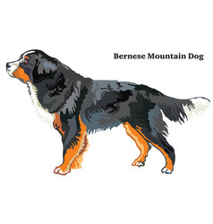 Colored decorative standing portrait of bernese vector