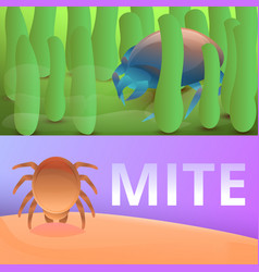 Insect mite banner set cartoon style vector