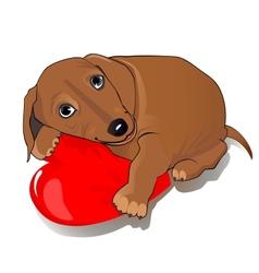 Dachshund dog heart vector image vector image