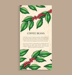 Arabic plant coffee beans java plant vector
