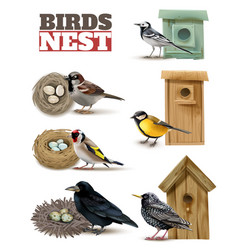 Birds nests realistic set vector