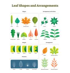 leaf shapes biology complex vector image