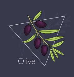olive branch logo design vector image