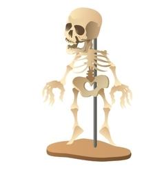 Human skeleton mannequin on white background vector image vector image