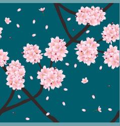 sakura cherry blossom flower on indigo green teal vector image